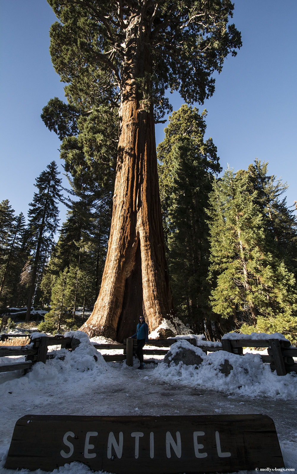 Extrêmement Sequoia National Park. California | Molly's bugs TF13