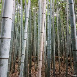Арасияма – уютный пригород Киото
