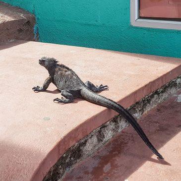 Все о жизни на Галапагосских островах